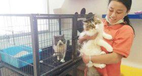 jasa penitipan kucing bandung